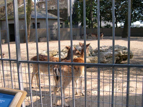 Animaux du jardin des plantes nantes en photo for Animalerie du jardin des plantes