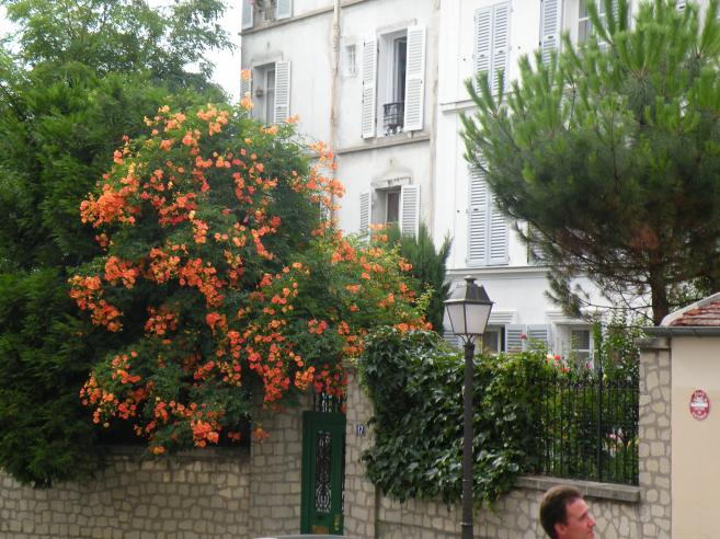 photo de paris en 2009 arbuste fleuri fleurs orang es montmartre. Black Bedroom Furniture Sets. Home Design Ideas